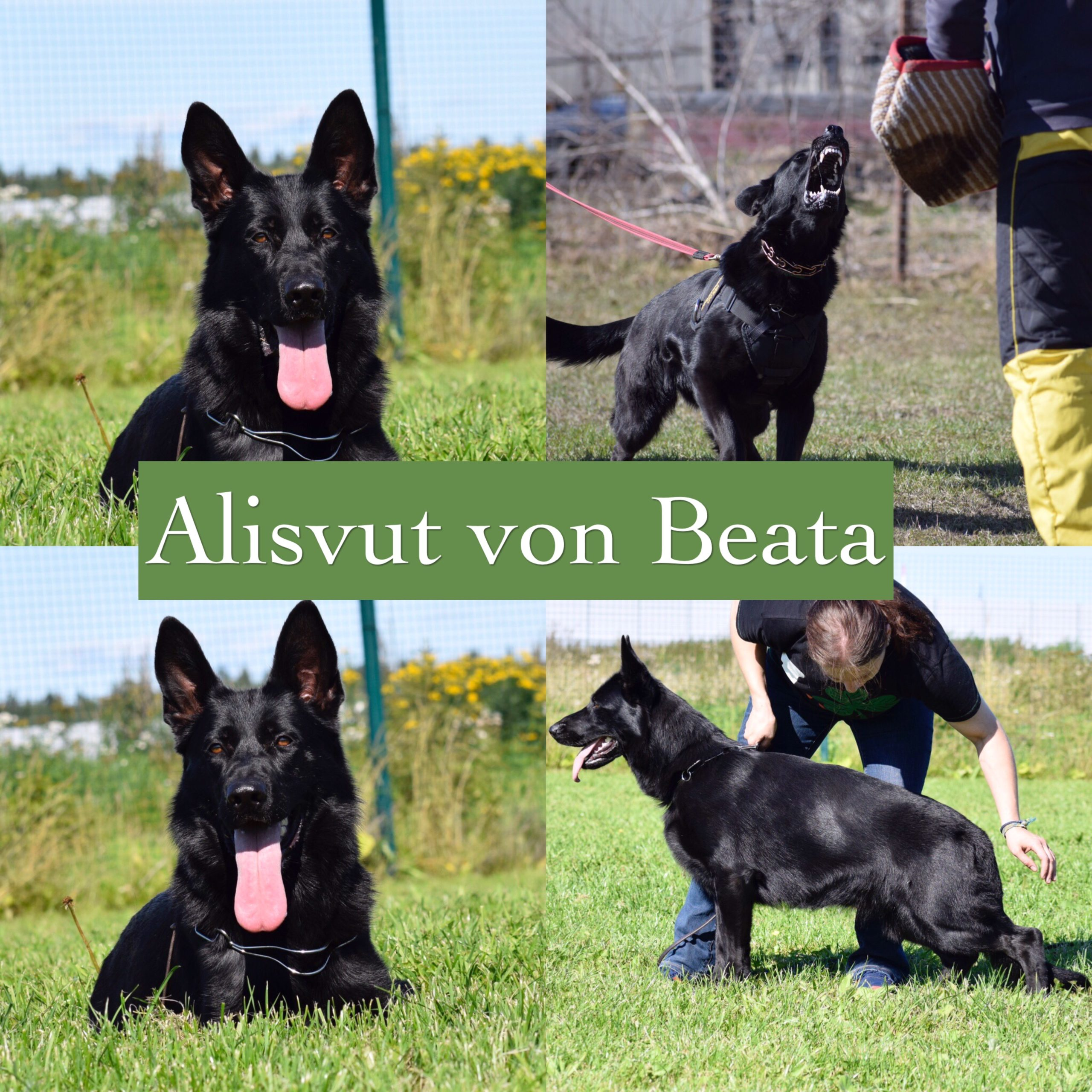 Alisvut Von Beata